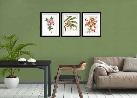 Set Of 3 Botanical Illustrations - Premium Quality Framed Digital Print With Matte And Glass (17 x 12 inches) each