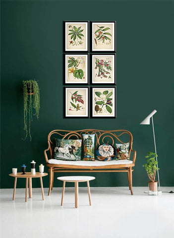Set Of 6 Botanical Illustrations - Premium Quality Framed Digital Print With Matte And Glass (17 x 12 inches) each