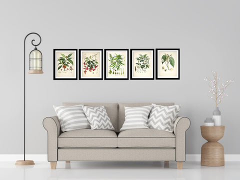 Set Of 5 Botanical Illustrations - Premium Quality Framed Digital Print With Matte And Glass (17 x 12 inches) each