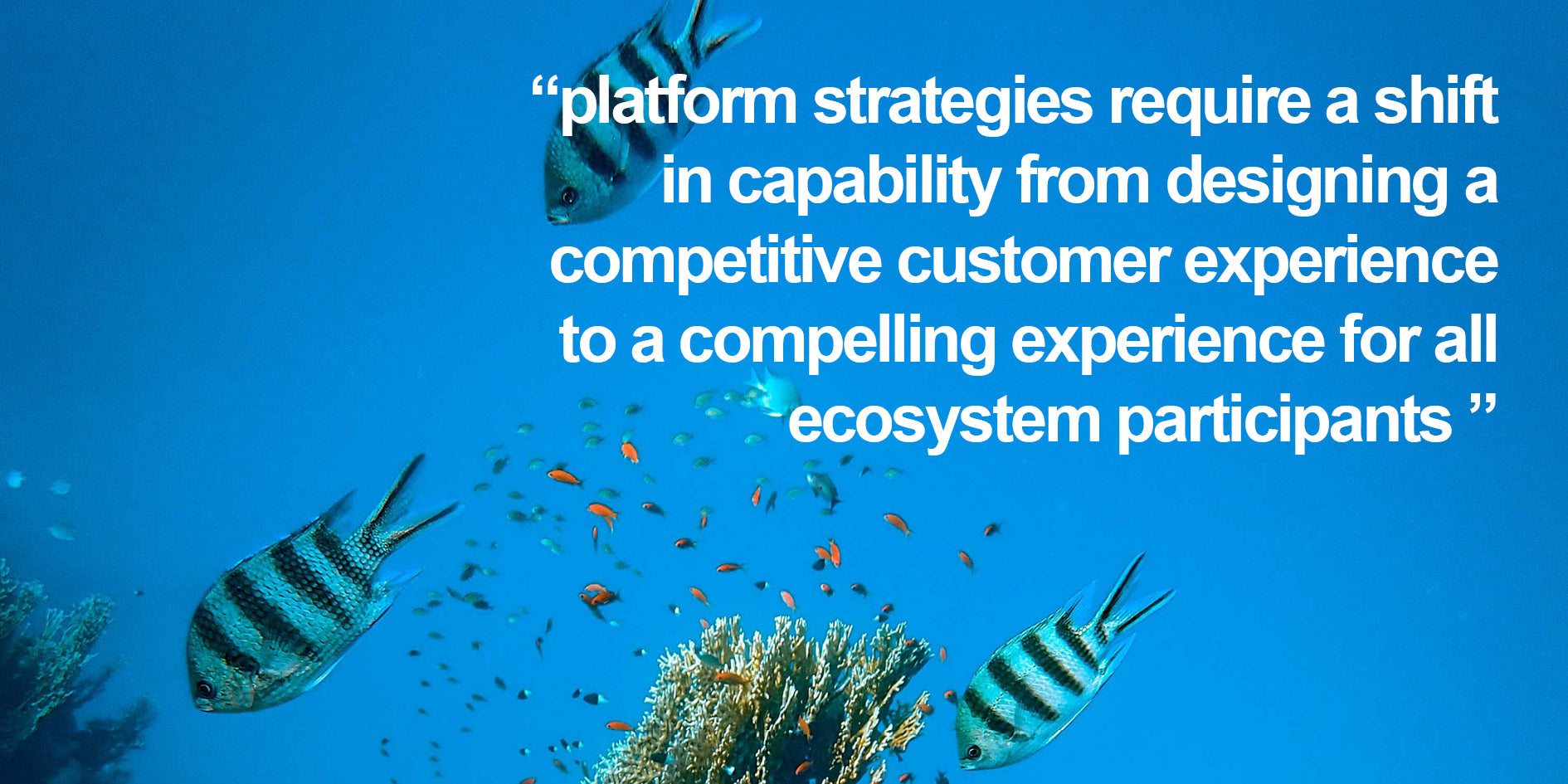 platfrom strategies demand capability at designing compelling experiences for all ecosystem participants