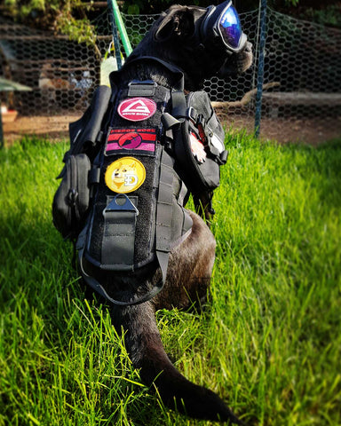 One Tigris Molle Dog Vest