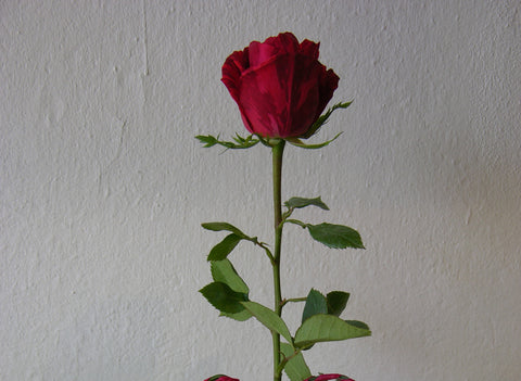 Rosa rossa decorata