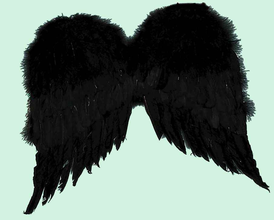 Costume Wings Black Feather Wings - HalloweenCostumes4U.com - Accessories