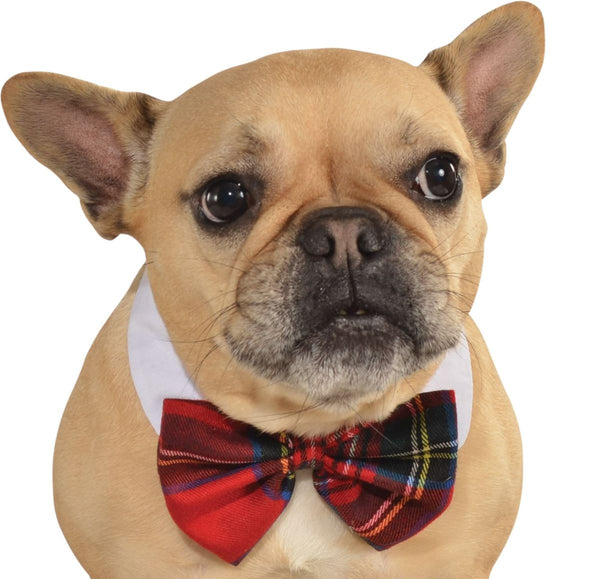 Pets Bow Tie Costume - Various Colors