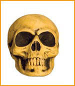 Small Skull Prop - HalloweenCostumes4U.com - Decorations