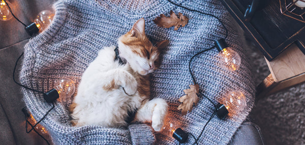 3 Ways To Pamper Your Pet On World Animal Day