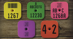 Y-Tex litterstar custom ear tags for piglets