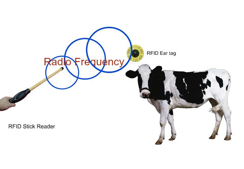 CCK Sells RFID ear tags and readers