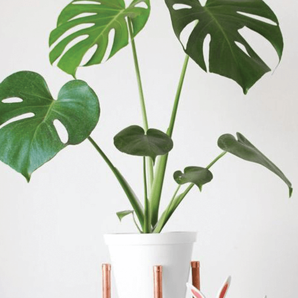 Monstera Leaf Plant Tropical Silk