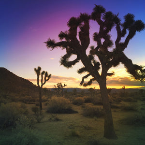 Joshua Tree Meet Up - Oct. 1
