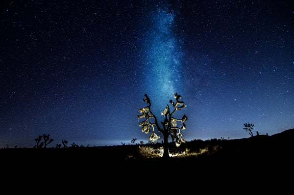Sunset & Stars Meet Up - Joshua Tree NP