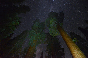 Find Your National Park After Dark