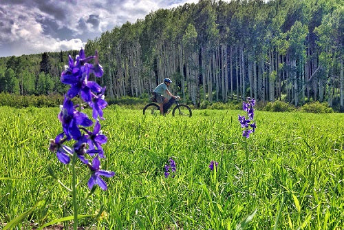 Mountain bike in a field of wildflowers