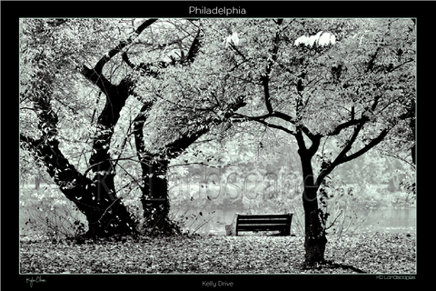 Philadelphia Pa, Fairmount Park, Evening Walk, Kelley Drive, Fall, Autumn, B&W, Trees, Branches, Bench, Fairmount Park, River, Schuylkill River