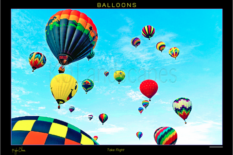 Hot air balloons take flight!