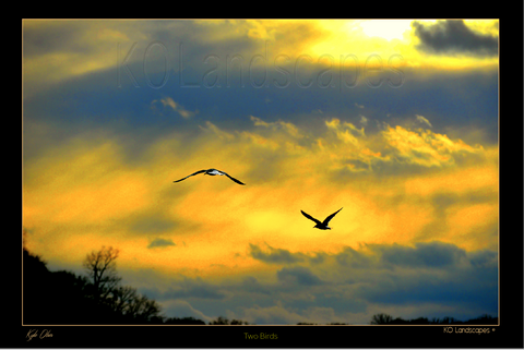 Nature, Sunshine, Yellow, Blue, Happy, Bright, Two Birds, Sunset, Silhouette, Sunburst
