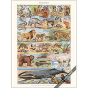 Greeting Card | French Mammals Greeting Cards