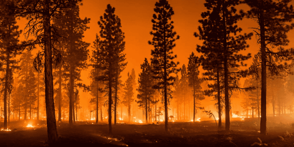 Things You Need to Know about Wildfires