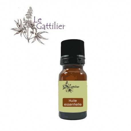 ANGELIQUE OFFICINALE (racine) Bio, Demeter - Ma Belle Nature
