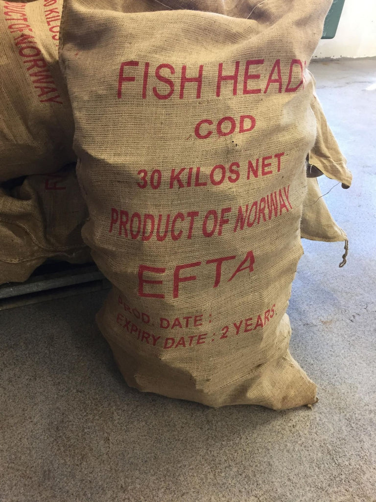Naturally dried Atlantic Cod heads in 30 kgs bales.