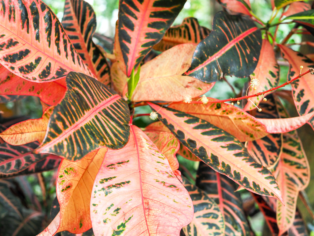 brooklyn-botanical-garden-orange-leaves
