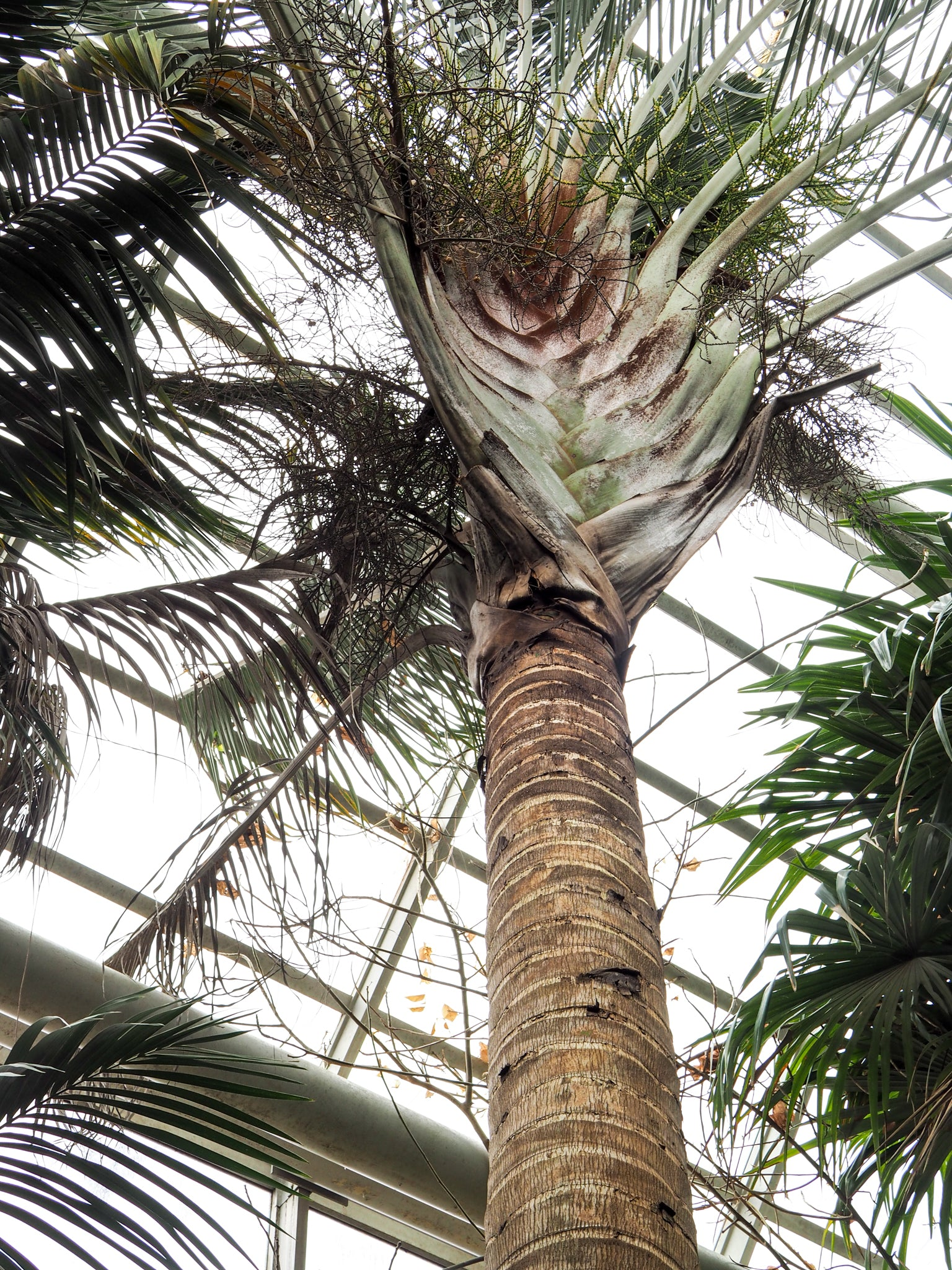brooklyn-botanical-garden-palm-tree