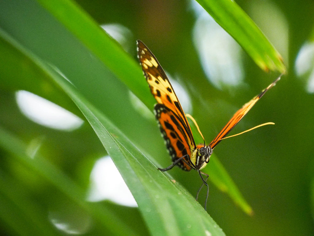 fairchild-tropical-botanic-garden-orange-butterfly