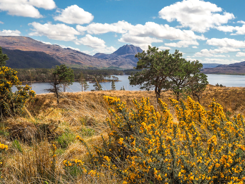 walk-must-see-loch-maree