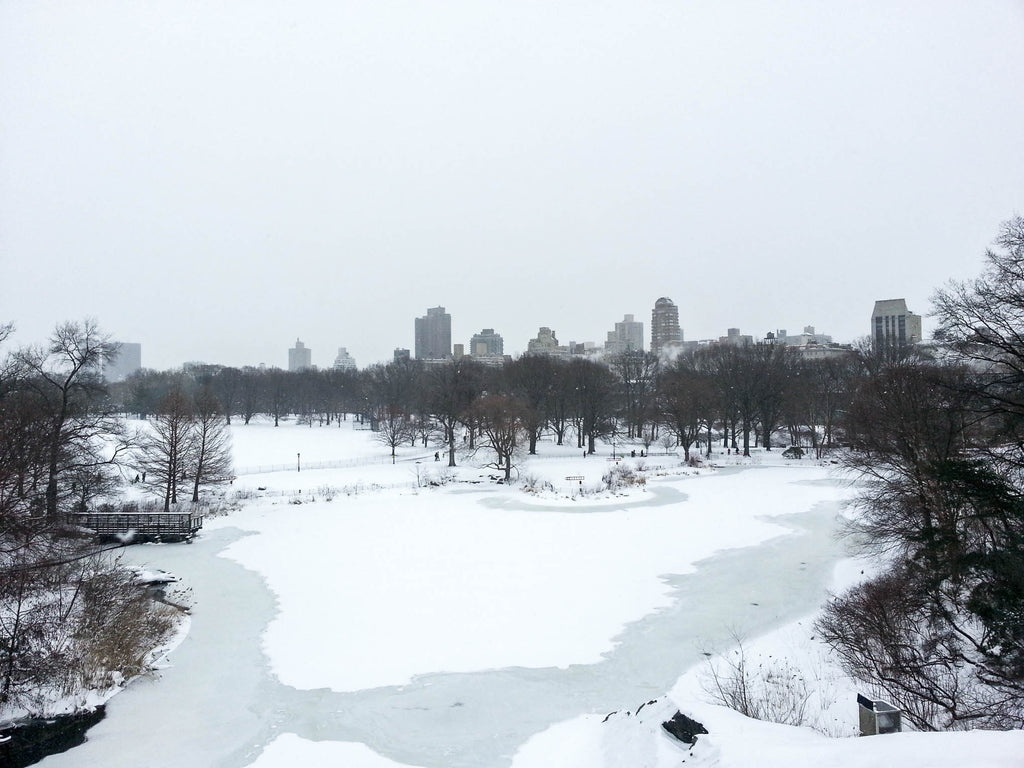 new-york-central-park-neige