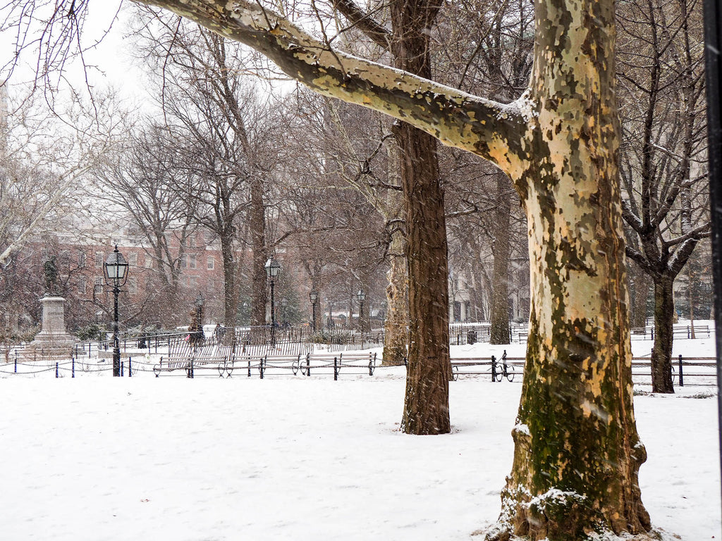 new-york-washington-square-park-snow