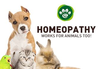 Animals & Homeopathy -  Basics