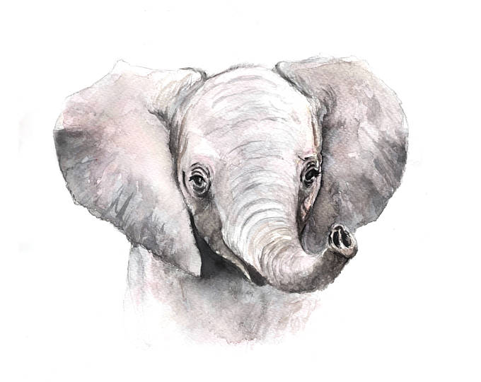Wild Canary Studio Baby Elephant Watercolour Print | kids at home