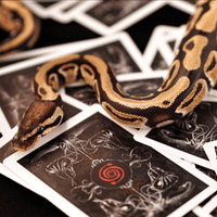 Venom Deck by US Playing Cards - Got Magic?