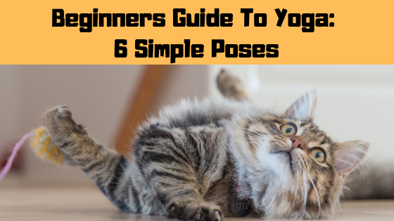 Beginners Guide To Yoga: 6 Simple Poses