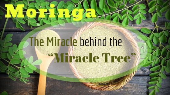 "Moringa the ""Miracle Tree"". New Superfood that's Here to Stay!"