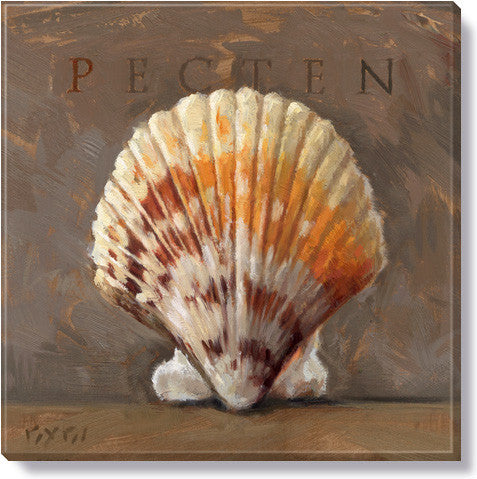 "Canvas Art - Pecten Shell 9"" x 9"""