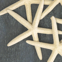 "Five Pack of 5"" Finger Starfish"