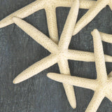 "Five Pack of 4"" Finger Starfish"