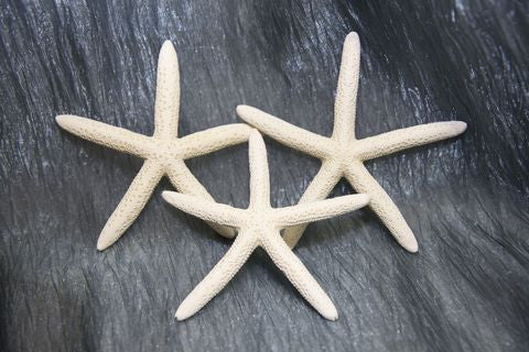 Five Pack Starfish