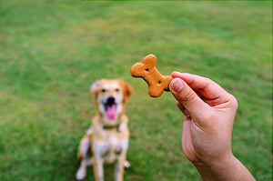 Be Careful of Dog Training Treats!