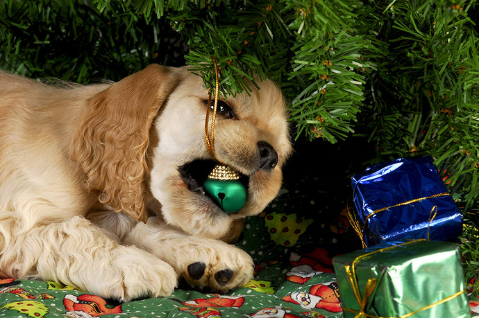 Danger for Pets Around the Christmas Holiday