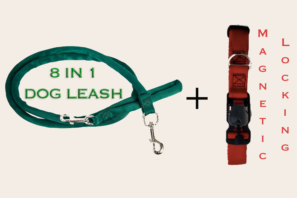 Leash Harness & Safety Collar Combo