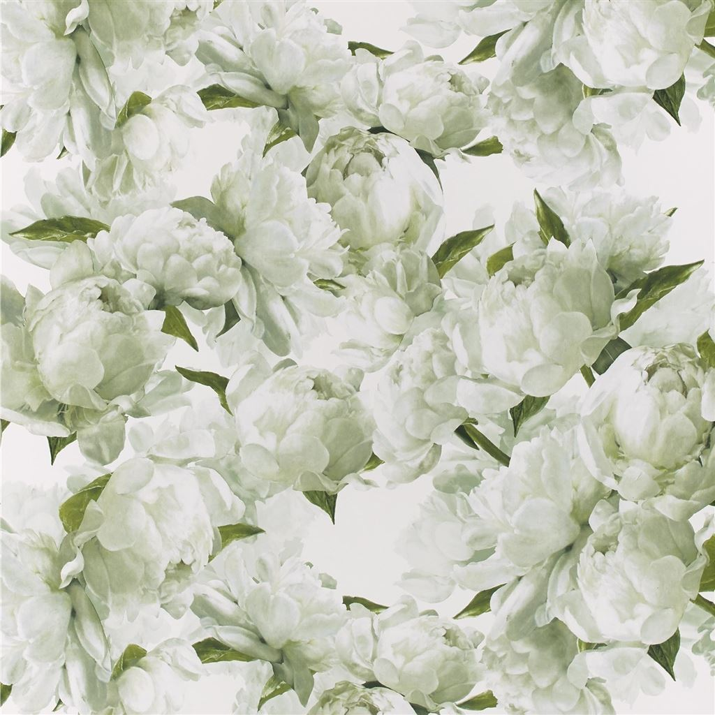 Peonia Chartreuse Wallpaper