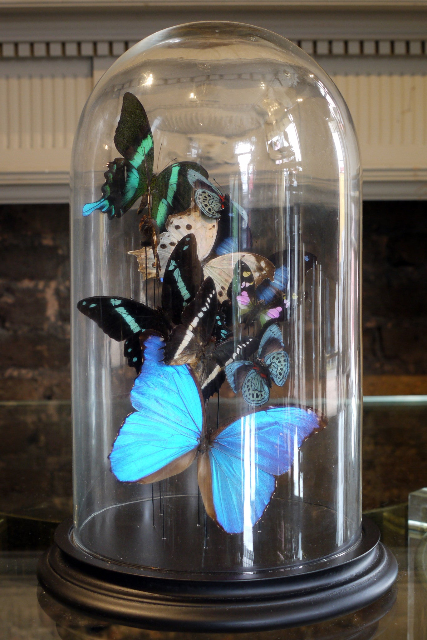 X Butterflys in a Bell Jar
