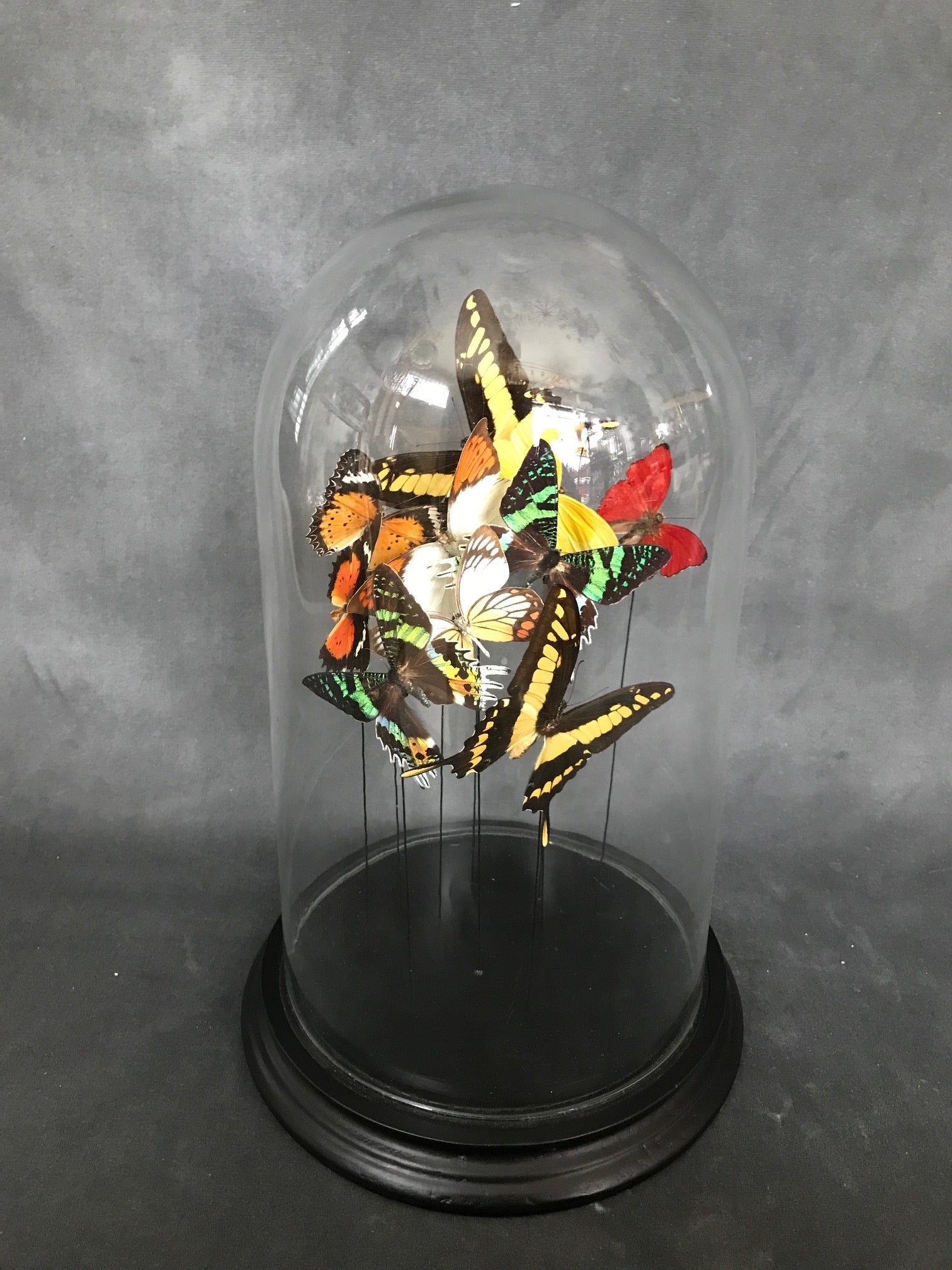 Butterflies in a Bell Jar