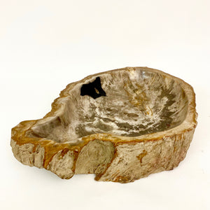 Very large  fossilised wood bowl from the early triassic period  .
