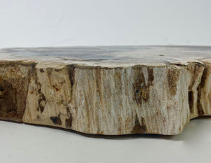 Huge slice of fossilised wood with great colour.