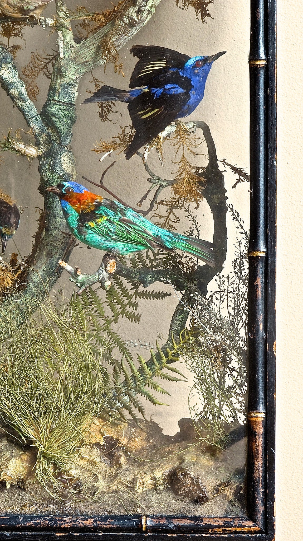 An early 19th century display of humming birds and finches set in a naturalistic setting featuring insects and mosses. The case being glazed on both sides with a simulated bamboo edge detail.