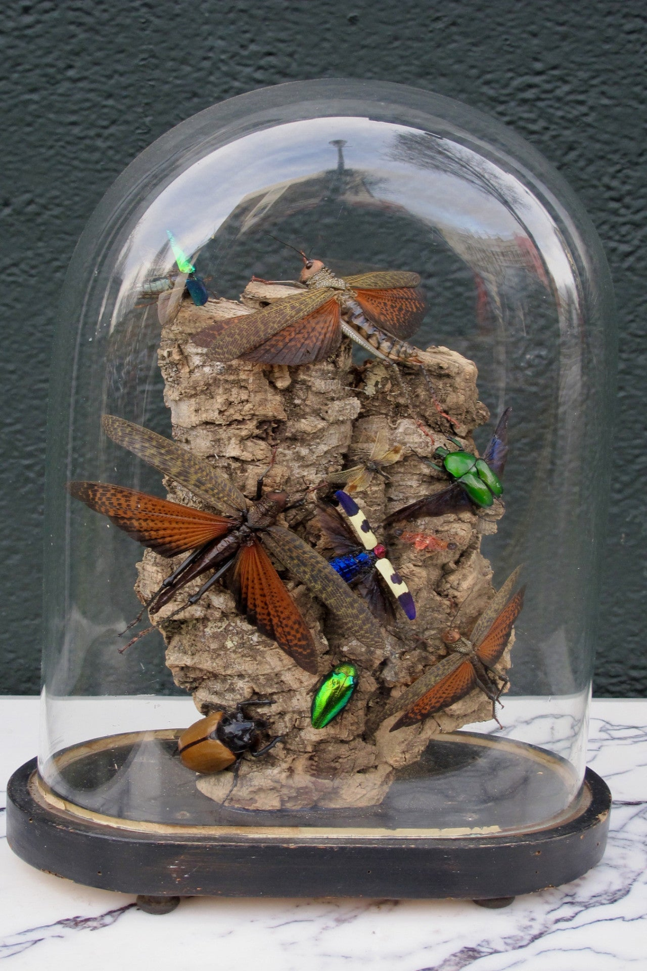 X Diorama of jewel beetles set in a victorian glass dome