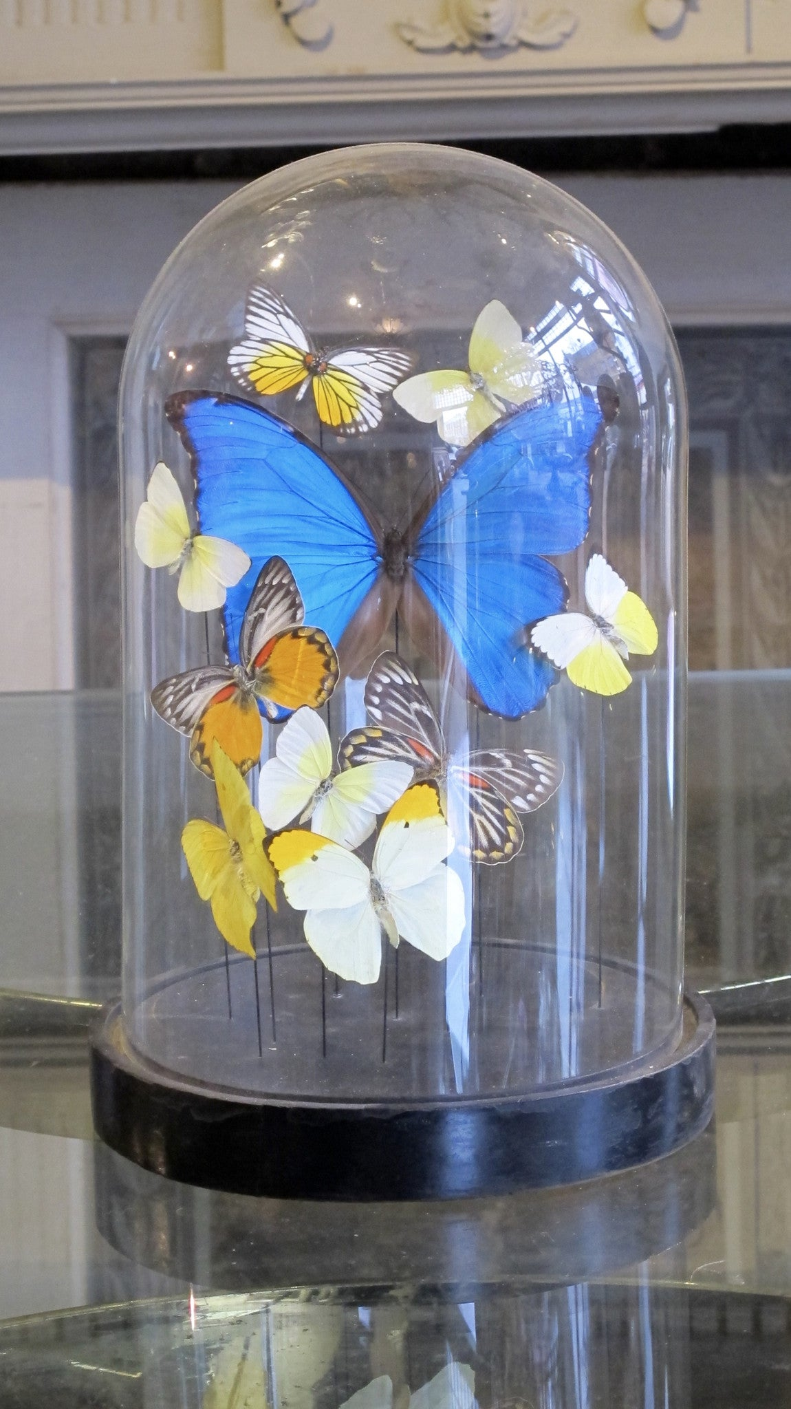 X Butterfly display